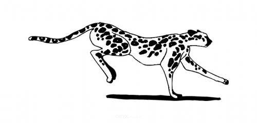 "Aufkleber ""Cheetah"" braun"